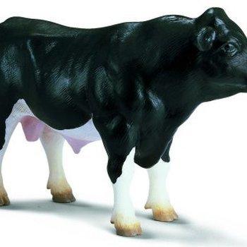 13143 Stier Holstein
