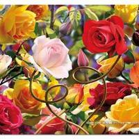 E 14112 Wild rose tango